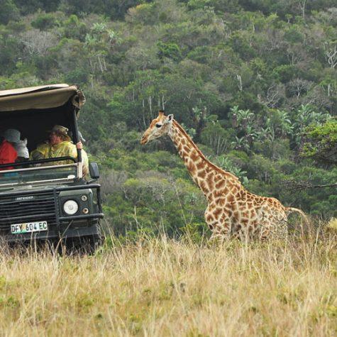 CTI South Africa-Hluhluwe Imfolozi Park