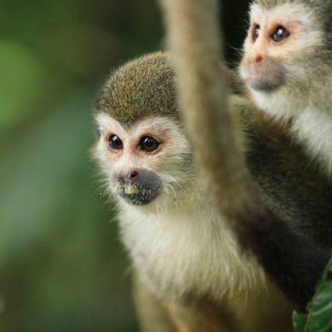 CTI  Colombia-Amazon Rain Forest