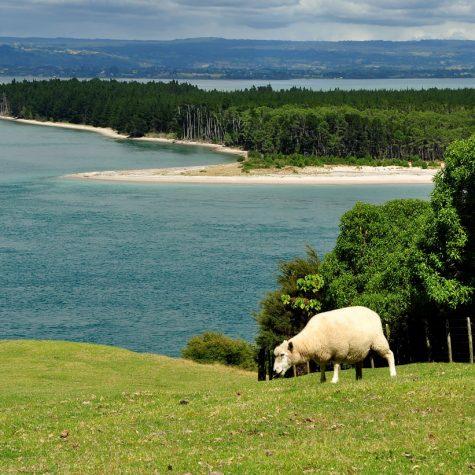 CTI New Zealand-Tauranga